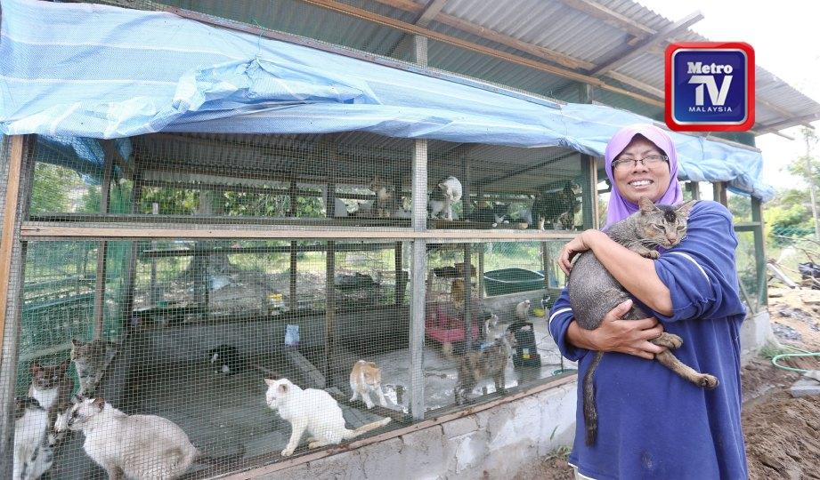 NOR Hayati menjaga 110 kucing di kawasan ladang di Kampung Sungai Kerandang, Bukit Tagar. FOTO Halimaton Saadiah Sulaiman