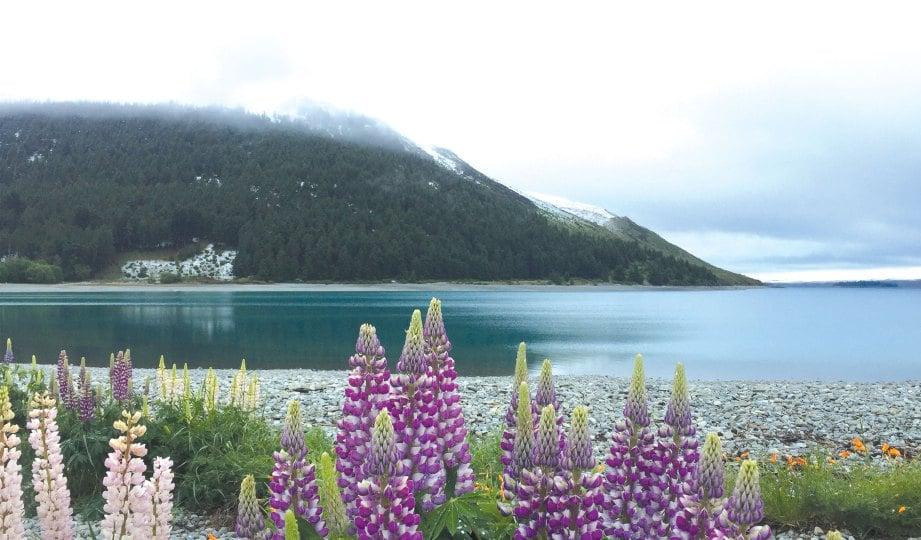 101+ Gambar Pemandangan Di New Zealand