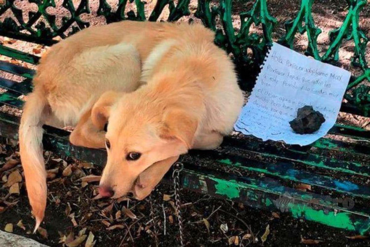 NOTA itu tercatat haiwan peliharaan itu ditinggalkan di taman berkenaan bagi menyelamatkannya daripada diseksa keluarga pemiliknya. FOTO Agensi