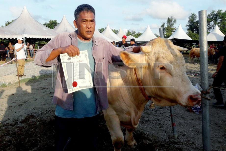 MOHD Mazuki bersama lembu sadonya bernama Mat Leh yang dinobatkan sebagai King Of Sado 2018. FOTO Ahmad Rabiul Zulkifli