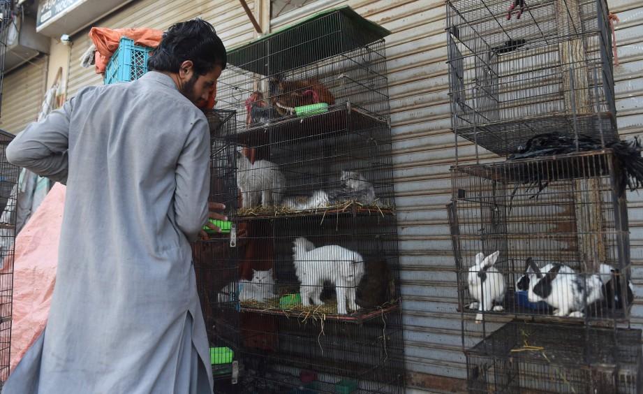 PEMILIK kedai mengalihkan sangkar haiwan ke luar kedai. FOTO AFP