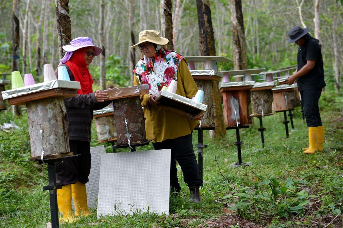 CHAHAYA (kiri) melihat satu daripada 66 sarang madu kelulut yang diusahakan. FOTO BERNAMA