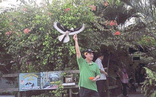 AKTIVITI memberi makan burung menjadi aktiviti baru di Pangkor.