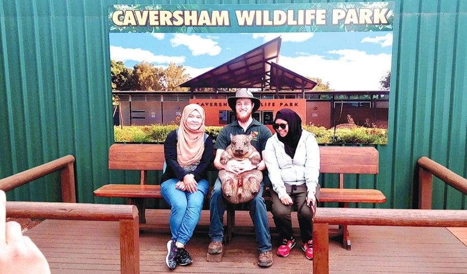 PENULIS dan rakan tidak melepaskan peluang bergambar bersama wombat, iaitu haiwan marsupial Australia berkaki pendek dan unik di Caversham Wildlife Park.