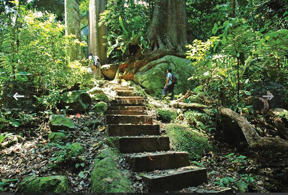 REDUP kawasan hutan kerana adanya pokok besar menjadi kanopi. FOTO Ihsan Swiss Cottage & Visit Malaysia