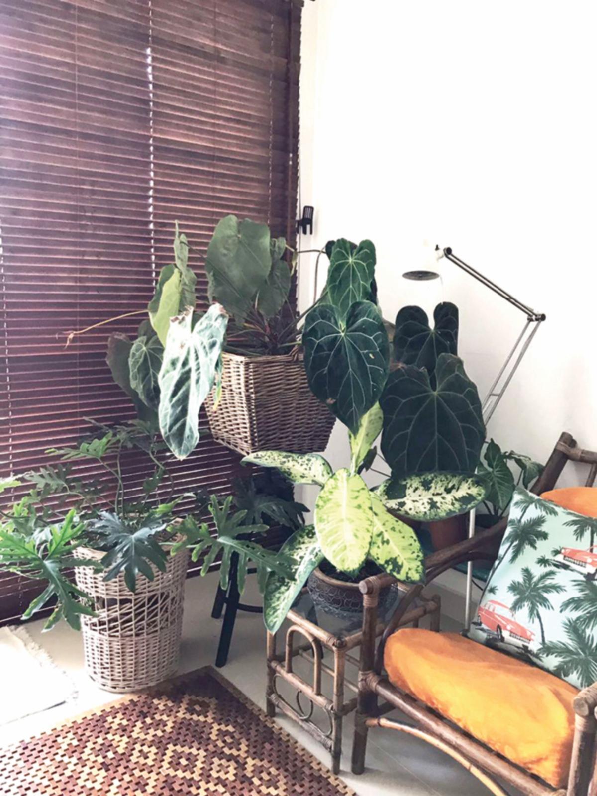 PENJAGAAN untuk setiap tanaman juga menjadi keutamaan Siti Nadiah dan suami.