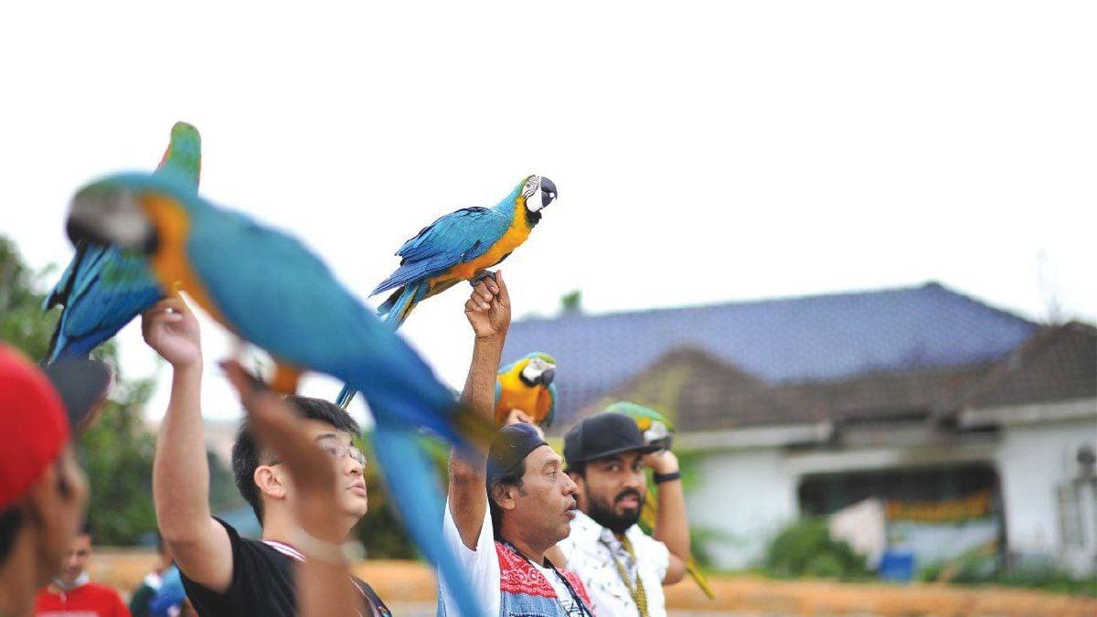 SYIMIR Ahmad sarankan lakukan latihan penerbangan bebas burung dengan komuniti supaya haiwan rasa lebih selamat.
