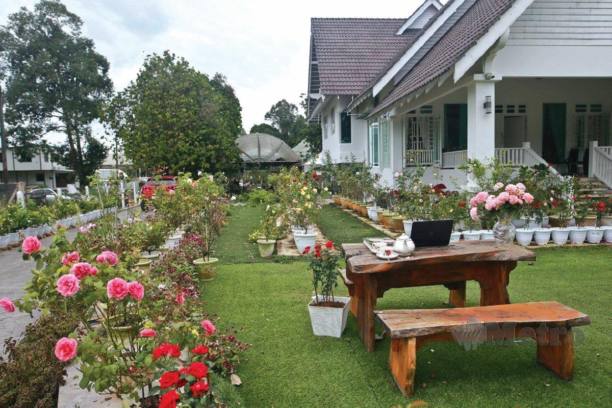 KAWASAN rumah Sharifah Marzety diserikan dengan bunga ros.