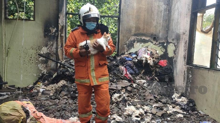 Anggota bomba menyelamatkan seekor kucing dalam kebakaran membabitkan sebuah pusat tahfiz di Lorong Alif. FOTO ZULIATY ZULKIFFLI