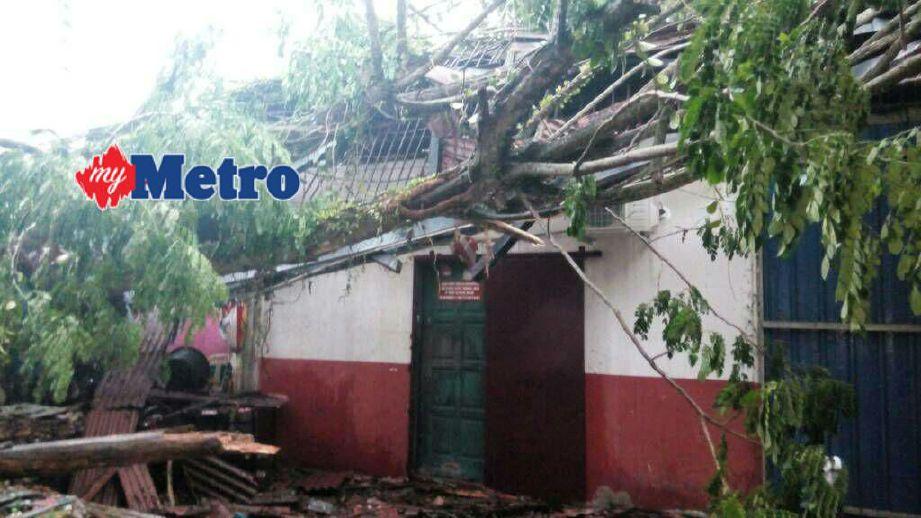 Pokok tumbang menghempap rumah penduduk di Pekan Kupang. FOTO ihsan pembaca