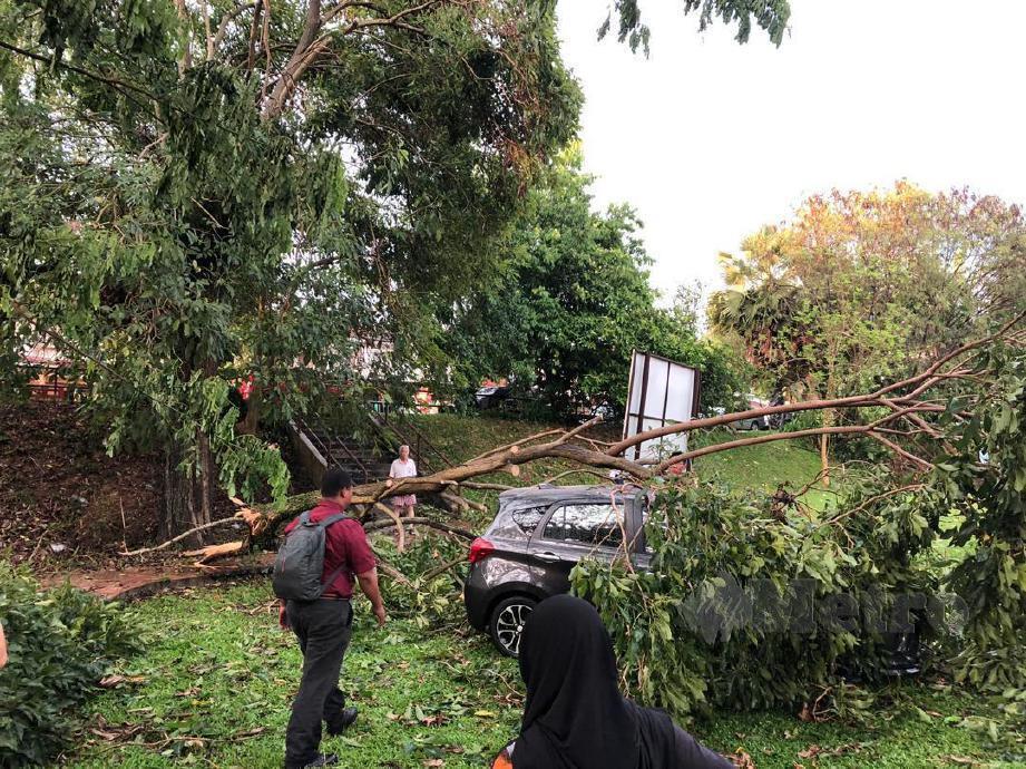 SEBUAH kereta dihempap pokok tumbang dalam kejadian ribut petang tadi. FOTO ihsan APM