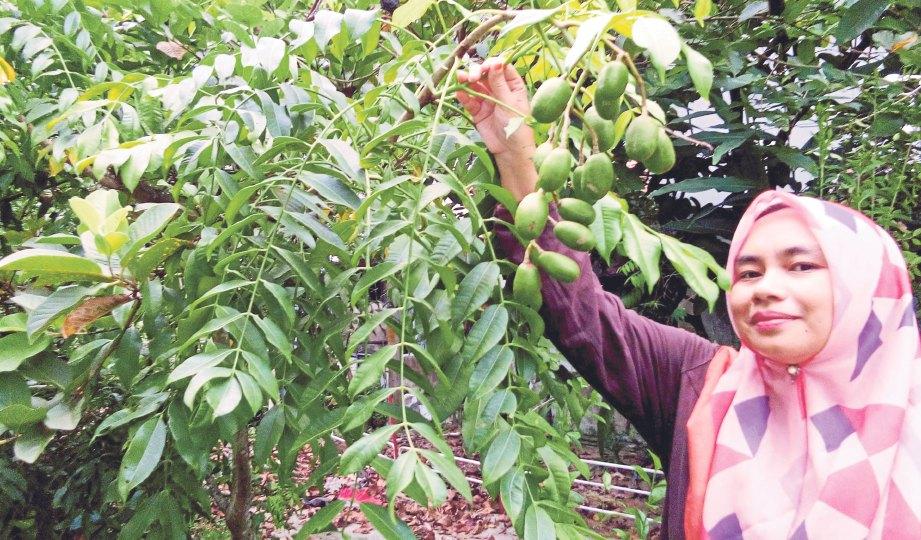SETIAP pagi Ana akan melihat tanaman herba bagi memastikan tiada ulat atau siput yang merosakkan tanaman.