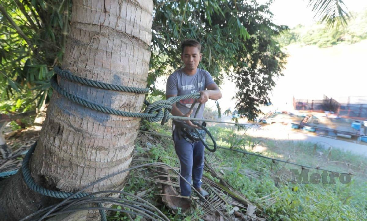 MOHAMMAD Khairil mengikat sangkar ikan pada pokok kelapa di Kampung Tanjung Kubu, Temerloh bagi mengelakkan ia dibawa arus deras pada musim tengkujuh. FOTO MOHD RAFI MAMAT