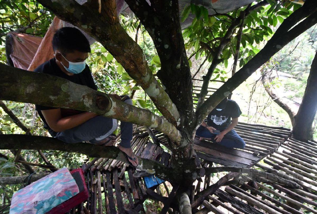 MUHAMMAD AMEIN (kanan) ditemani rakan membina pondok di atas sebatang pokok di kaki bukit berhampiran bagi melayari internet sejak Pelaksanan Perintah Kawalan Pergerakan Bersyarat (PKPB). FOTO NIK ABDULLAH NIK OMAR