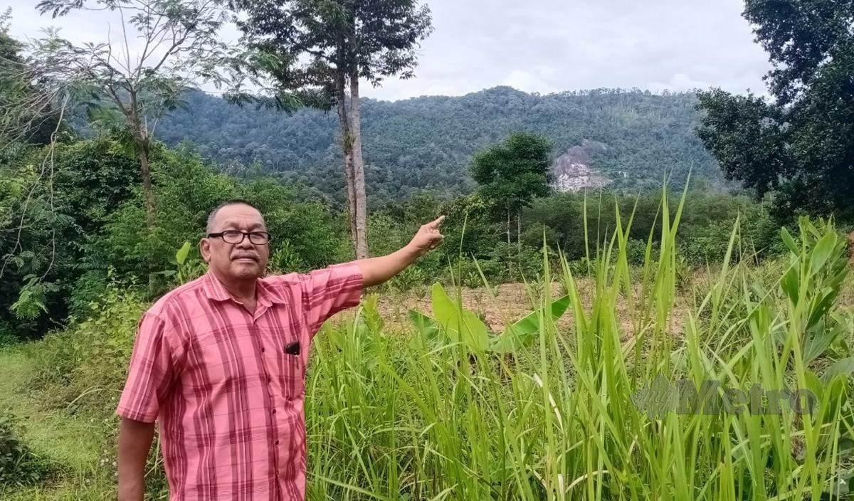 ISMAIL menunjukkan Hutan Simpan Bukit Enggang yang dipercayai mempunyai mineral bernilai tinggi berhampiran  rumahnya di Kampung Charuk Kit, Sik. FOTO Noorazura Abdul Rahman