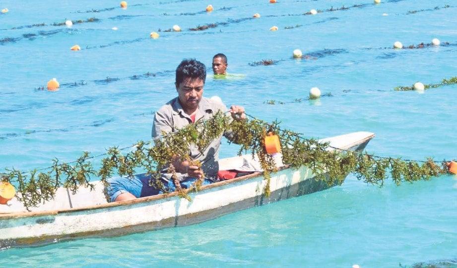 TIMBALAN Ketua Setiausaha (MOA) Badrul Hisham Mohamad cuba menuai rumpai laut.