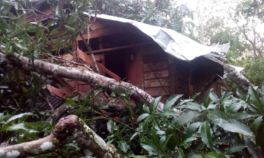 RUMAH penduduk rosak selepas ditimpa pokok di Kampung Tebing Tinggi. FOTO ihsan pembaca