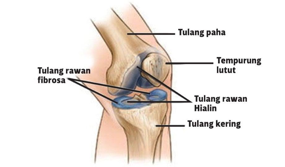 GAMBAR struktur lutut.