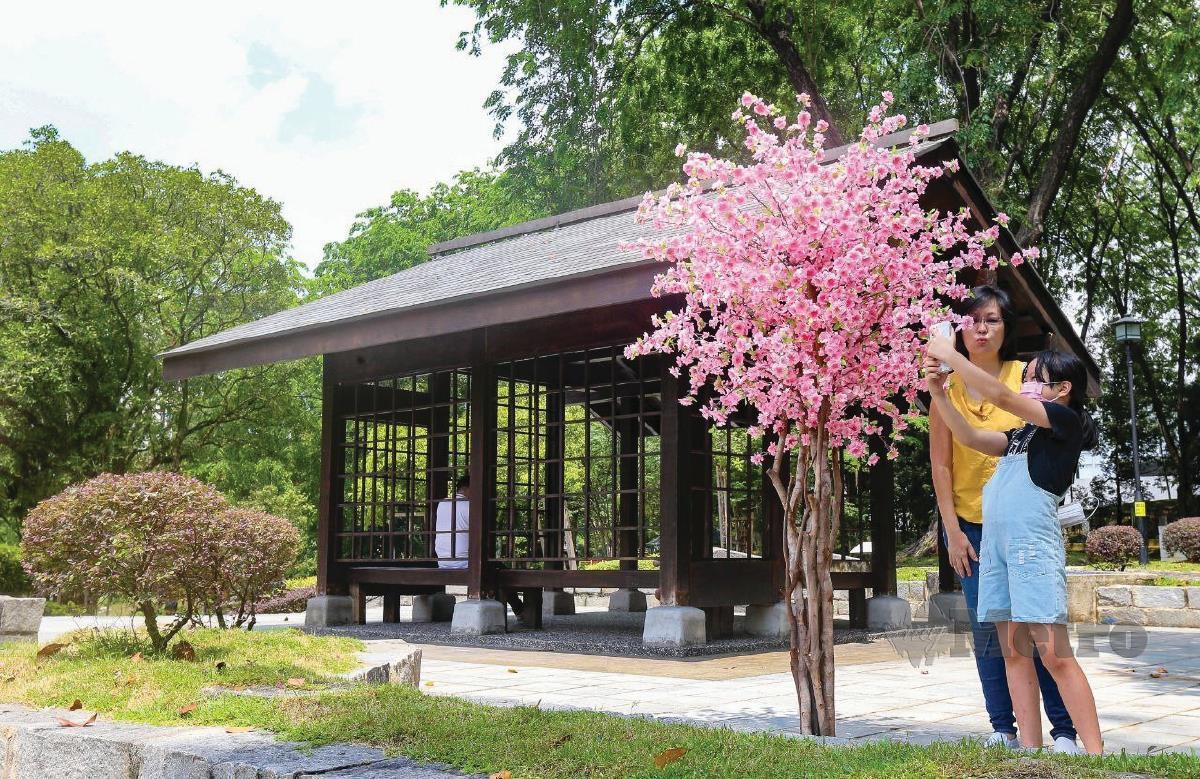 POKOK sakura hiasan menyerikan lagi kawasan Asumeya.
