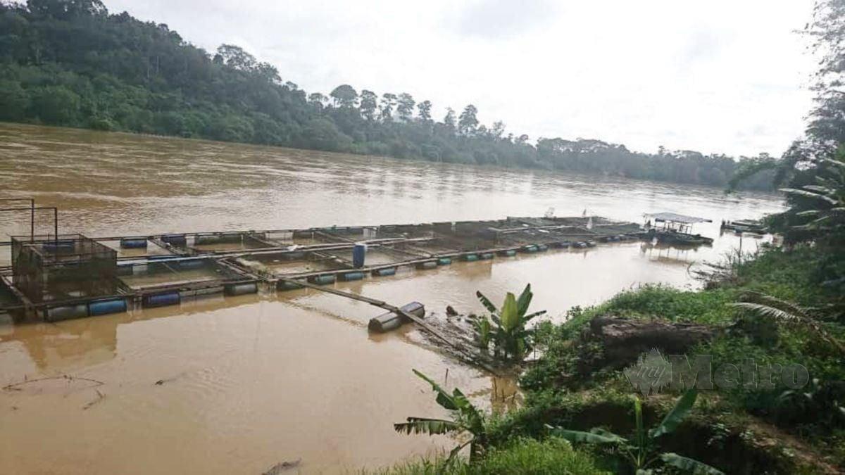 SANGKAR ikan berada dalam keadaan bahaya sekiranya paras air Sungai Pahang terus naik. FOTO MOHD RAFI MAMAT