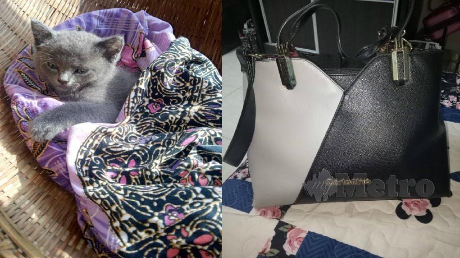 Anak kucing diberi nama Sopi selepas ditemui dalam longkang dan beg tangan (gambar kanan) milik Yuslini yang mahu dijual bagi menampung rawatan si bulus itu. Foto Ihsan Yuslini Mohd Yusof