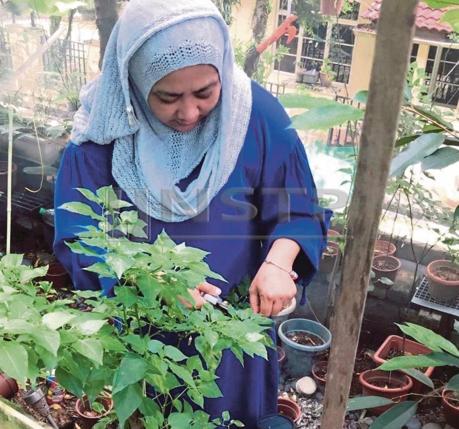 BERCUCUK tanam sebagai terapi diri di rumah. FOTO Siti Zarinah