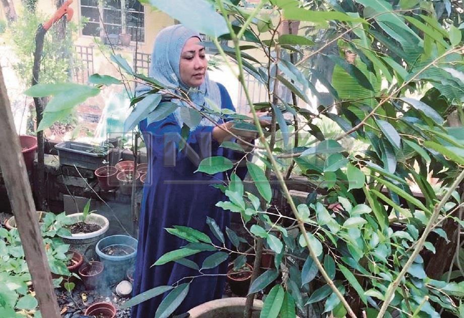 NOOR Hafizah melihat tanam-tanaman pada setiap pagi. FOTO Siti Zarinah