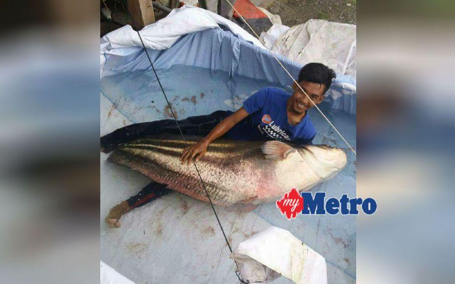 Ikan yang berjaya ditangkap. FOTO Shaiful Shahrin Ahmad Pauzi