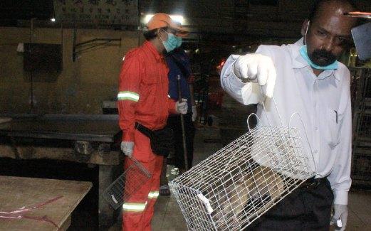 Mariappan menunjukkan dua daripada tujuh tikus yang dijerat dalam tempoh kurang lima minit selepas perangkap tikus dipasang di Pasar Pudu, Jumaat lalu.