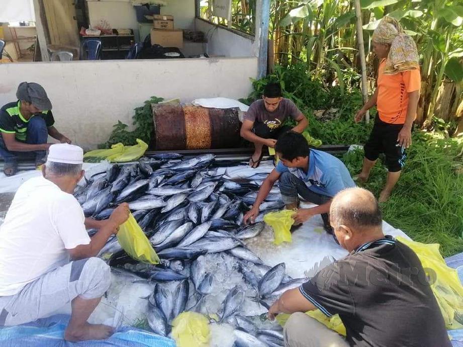 SUKARELAWAN Dapur Kampung Prihatin Kampung Pulau Manis, Serada sedang menguruskan ikan tongkol yang akan diagihkan kepada penduduk kampung sempena perayaan Aidilfitri. FOTO IHSAN PEMBACA