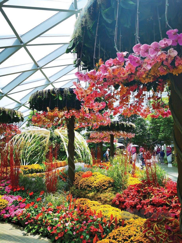 CANOPY Park yang terletak di Jewel Changi Airport menyedikan pelbagai jenis flora. FOTO NSTP