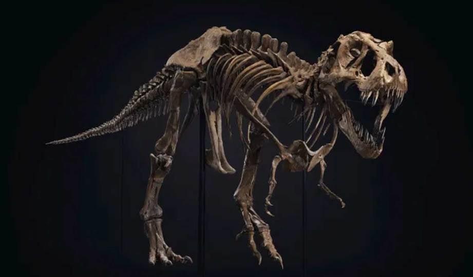SPESIMEN lengkap T-Rex dijual pada harga AS$31.8 juta (kira-kira RM132 juta). FOTO Christie