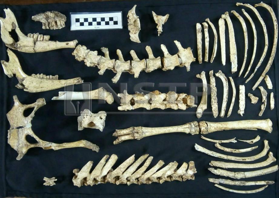 FOSIL rusa prasejarah yang ditemui di Buenos Aires. -Foto AFP